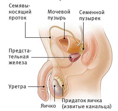 Обрезанные гермафродиты фото
